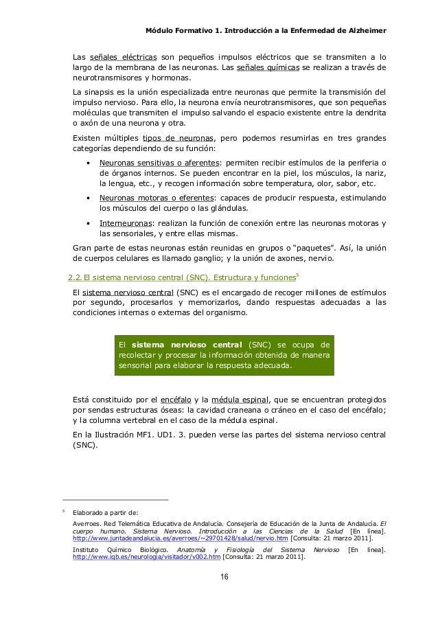 Páncreas anular medlineplus enciclopedia médica illustración