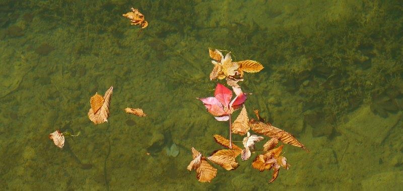 Gänseblümchen dunst schwester heißen freund video foto 1