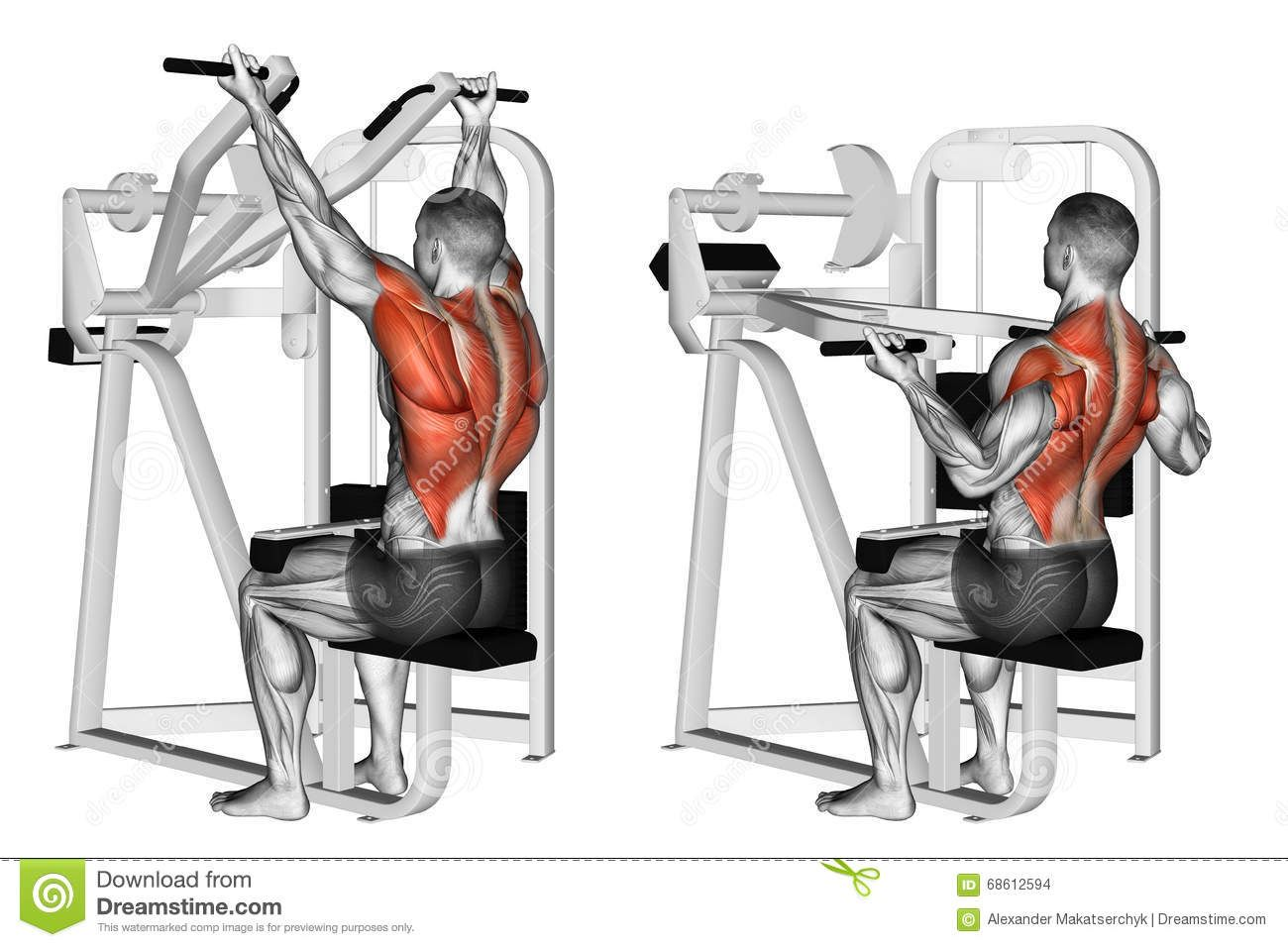 Weibliche Muskelwachstum Animation